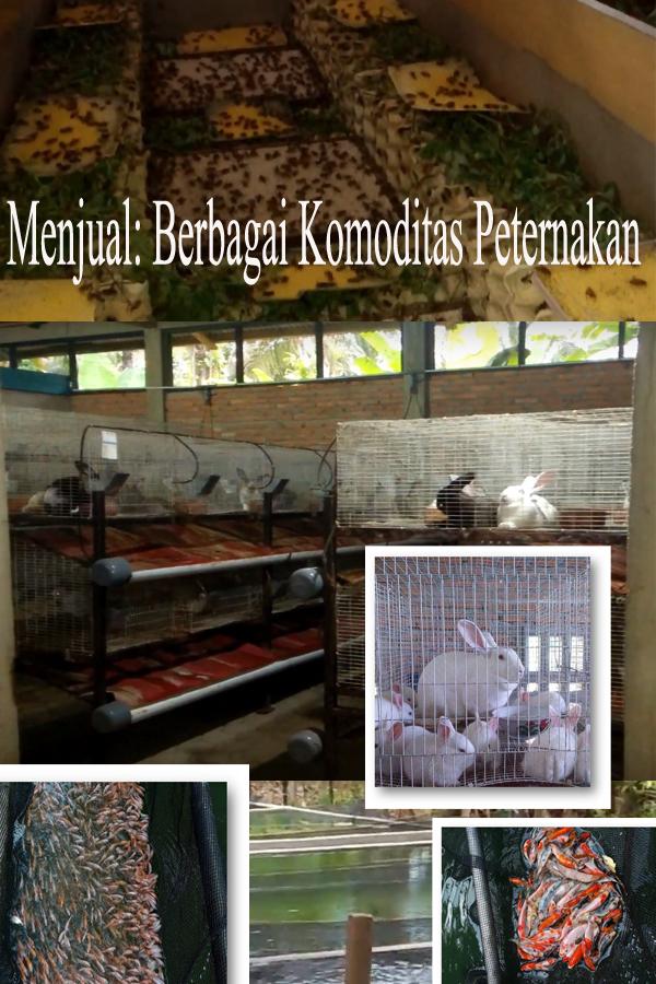 Menjual berbagai Komoditas Peternakan Desa KHM